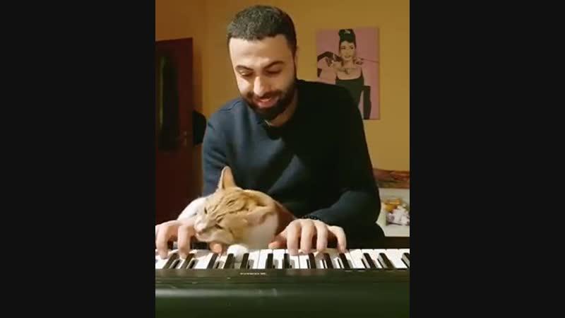 Музыкант Sarper Duman из Турции и его котик