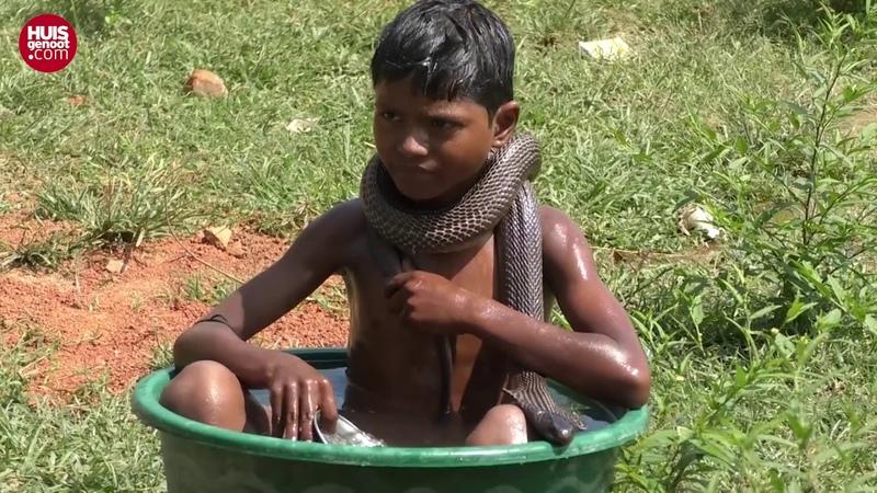 Kyk dié seun se 3 skrikwekkende kobra vriende