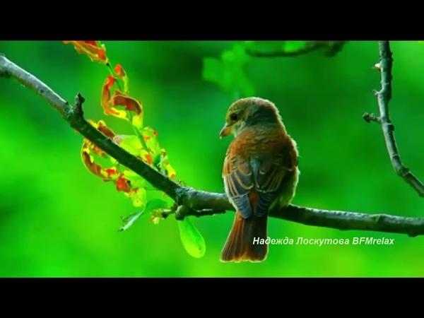 Нежная музыка для души Пение птиц