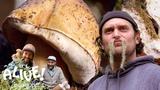 Brad Forages for Porcini Mushrooms It's Alive Bon App
