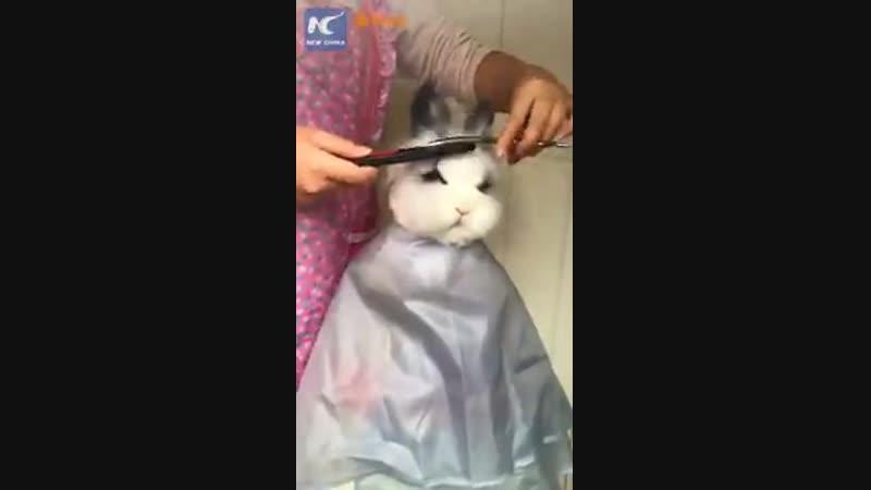 Кролик у стилиста