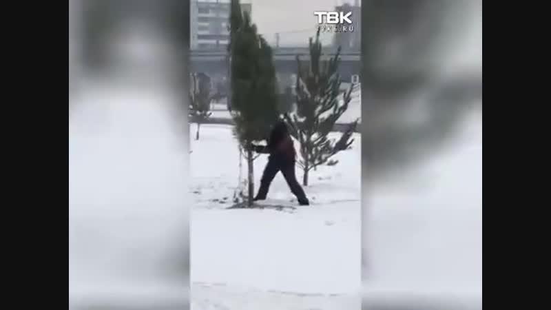 В Красноярську на Росії до приїду диктатора путіна «висадили» алею з зрубаних ялинок