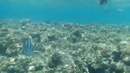 Sharm el Sheikh Hotel Ghazala Beach Hausriff