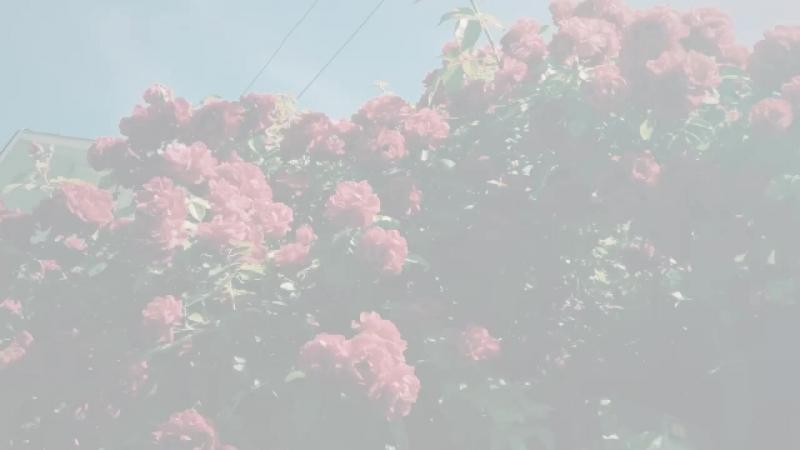 Viber Images-Лес-1.mp4