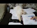 Бася мешает Лене работать