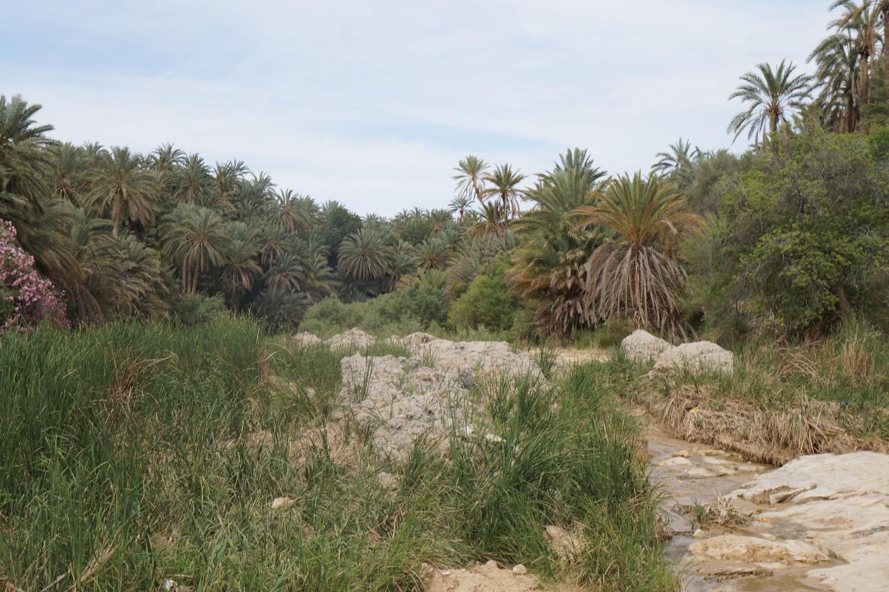 Тамерза - самый большой горный оазис в Тунисе оазис, Тамерза, оазиса, сразу, находится, можно, только, оазисы, Однако, Тамерзы, жизни, каньон, небольшой, рядом, должен, самый, подойти, очень, однако, увидели