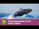 Гренландские киты поют джаз | Живая Планета