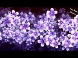 #Моцарт для Детей - Колыбельная - Музыка Моцарта для Детского Сна