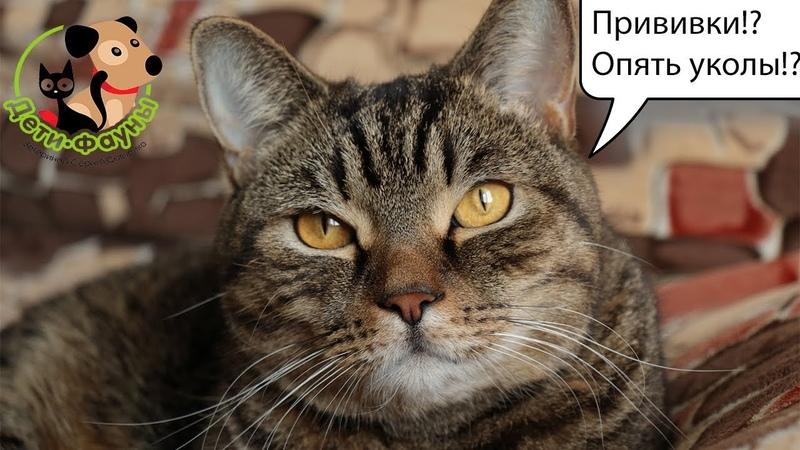10 популярных вопросов о прививках собак и кошек