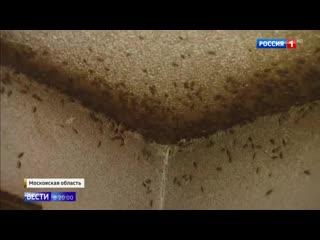 Тараканы, мусор и дети_ нехорошей квартирой в Балашихе занялся СК РФ