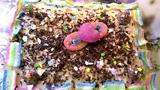 Тортик из готовых коржей с заварным кремом. Просто и вкусно! Что еще надо для праздника