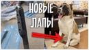 Новые лапы для бездомной собаки Подготовка к операции