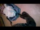 Арчи и Кекс