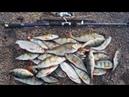 Восемь дней в тайге. Одиночный поход по северной реке часть 3 Бешеный клёв. Ведро рыбы за 2 часа