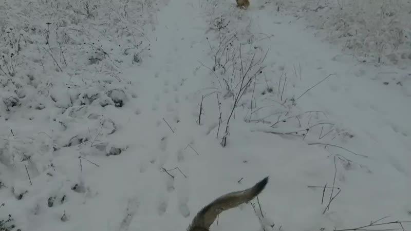 прогулка бандой по первому снегу