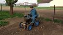 Traktorek SAM sadzenie ziemniaków
