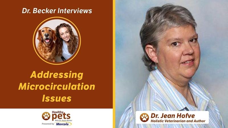 Решение проблем микроциркуляции у кошек Addressing Microcirculation Issues