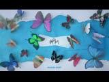 Елена Темникова - Бабочки [Radio Edit] (Official audio)