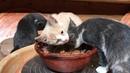 🍯 Как живут коты у гончара Обучение гончарству Волшебство керамики