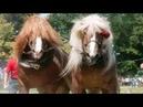 Cei mai frumosi cai | MASSIVE HORSE