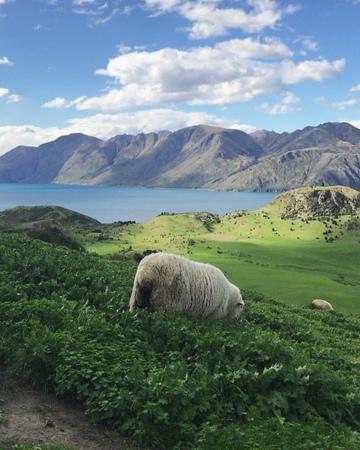 "Melillán Silvera Painemal on Instagram: ""This is New Zealand🇳🇿 Roys Peak Track, Wanaka newzealand purenewzealand wanaka royspeak film iphone..."