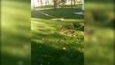 В Мариуполе провалился газон