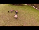 Canadian Nature Birds Ducks