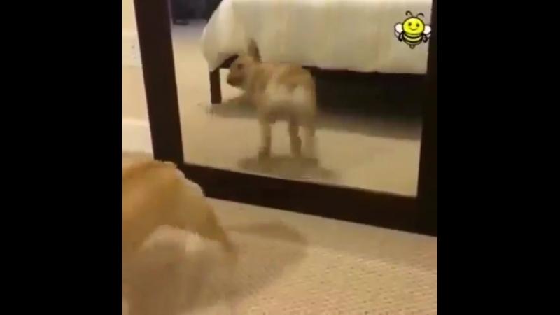 танцы перед зеркалом