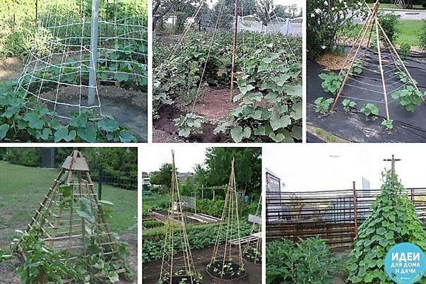 От читательницы: Выращивала в этом году таким способом, теперь только так сажать буду. Последние огурцы сняла 24 сентября. Росли без всякого укрытия.