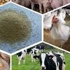Комбикорма для животноводства Серпухове