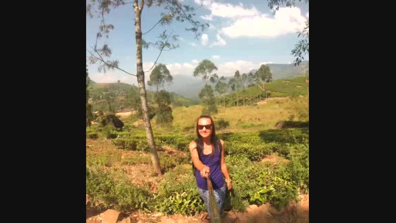Шри-ланка, чайные плантации