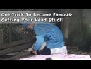 One Trick To Become Famous: Getting Your Head Stuck! | iPanda