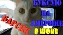 Жесть Буксую на Америке О о Барсик в шоке