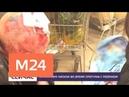 На москвича напали во время прогулки с ребенком - Москва 24