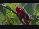 Дикая природа Перу арена боев - Анды - Добро пожаловать в джунгли 2 серия из 2 2018 HD 1080