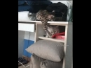 Instant Karma. When your Kitty doesn't understand GRAVITY