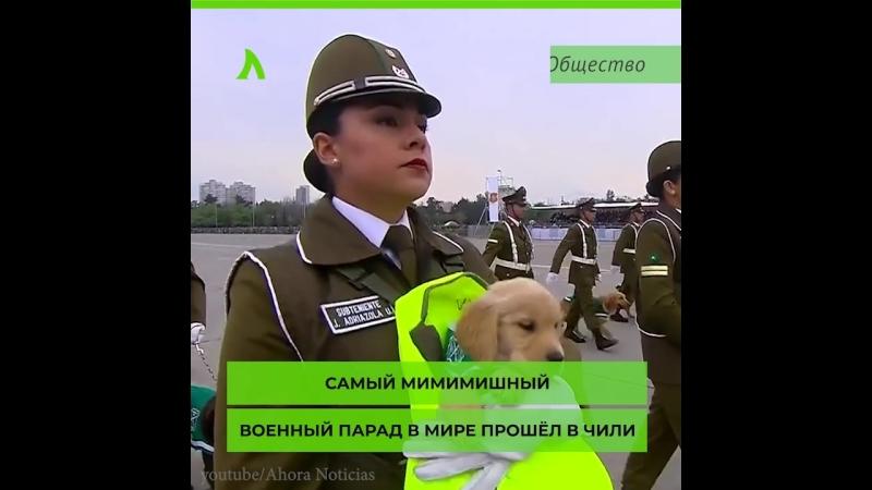 Парад военных пёсиков | АКУЛА