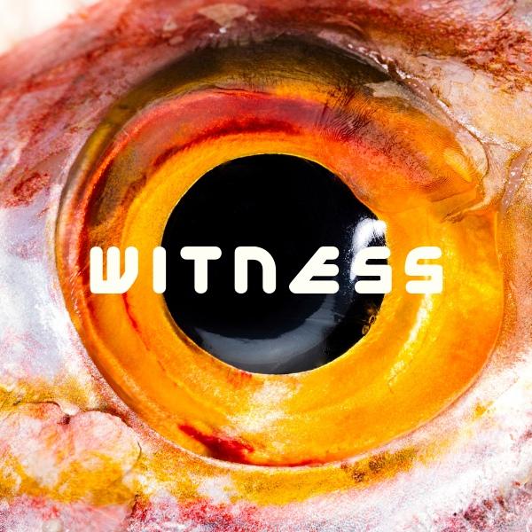 Афиша Тюмень WITNESS / FABRIC BAR 14.06