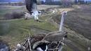 Osprey attacks Canada Geese with stick Charlo Osprey nest 14 April 2017
