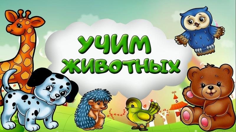УЧИМ ЖИВОТНЫХ Картинки животных для детей. Карточки животных. Животные детям. Лесные звери