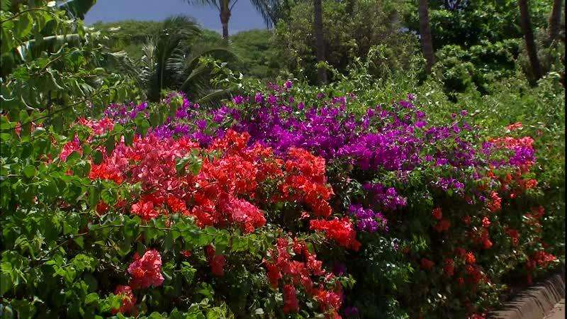 Гавайи_Симфония островов - Hawaii_An Island Symphony (2010)