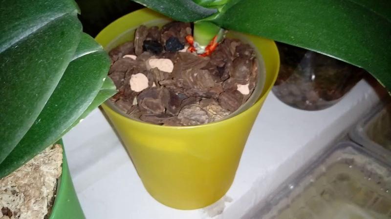 SOS для Ирины Погибающие орхидеи