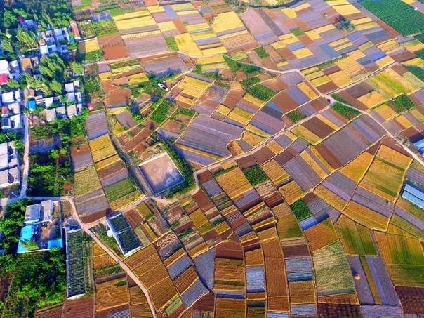 Пшеничные поля с высоты птичьего полета похожи на лоскутное одеяло
