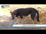 Стаи бездомных собак держат в страхе микрорайон Чапаевский
