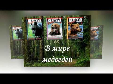 Виртуальная выставка В мире медведей