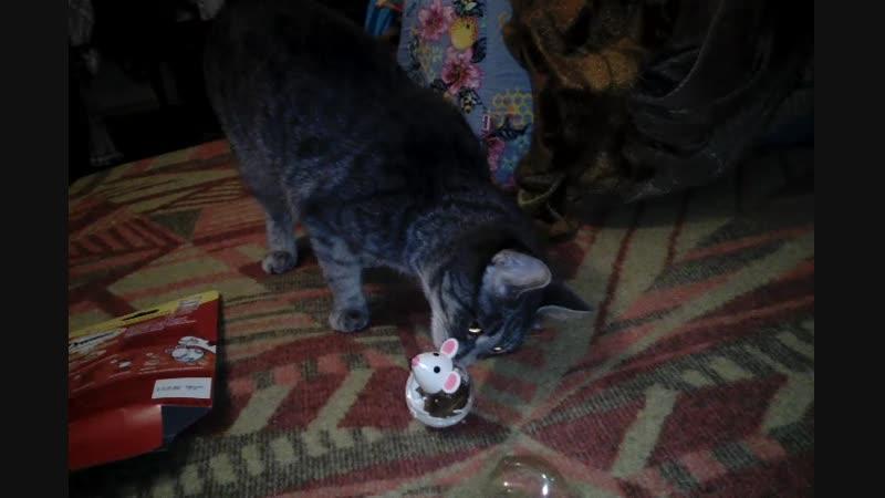 Васенька знакомится с новой лакомой мышкой!😋🐭
