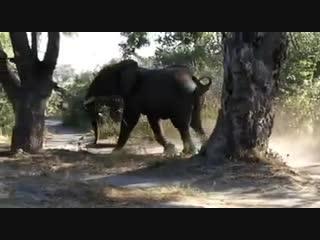 Слон и собака