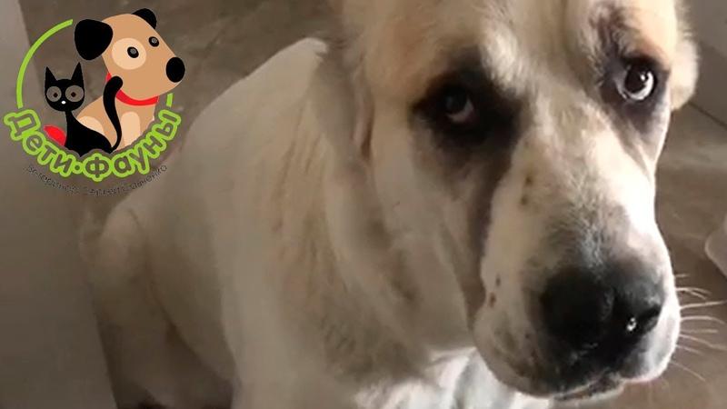 Питомниковый кашель у собак. Причины, симптомы, пути передачи