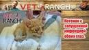 Vet Ranch на русском - Котенок с запущенной инфекцией обоих глаз / The Saddest Kitten You've Seen