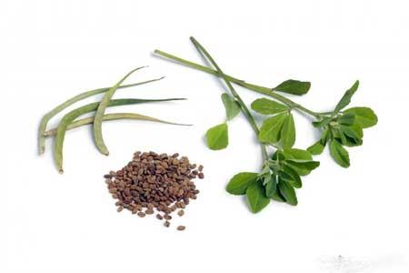 Пажитник - жаропонижающее растение.